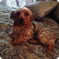 Adopt A Pet :: Landry - Yakima, WA