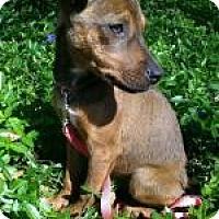 Adopt A Pet :: Angel 10 lbs - Marlton, NJ