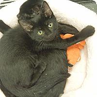 Adopt A Pet :: Blackberry - Medina, OH