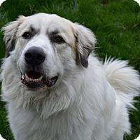 Adopt A Pet :: Furry Murphy - Broomfield, CO