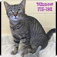Adopt A Pet :: Minnow - Tiffin, OH