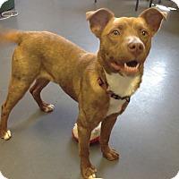 Adopt A Pet :: Lennie - Meridian, ID