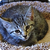 Adopt A Pet :: Pearl - Victor, NY
