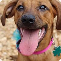 Adopt A Pet :: Bourbon - Alpharetta, GA