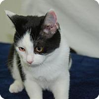 Adopt A Pet :: Fleur - Harrisonburg, VA