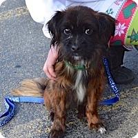 Adopt A Pet :: Rusty - Sparta, NJ
