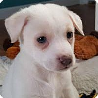 Adopt A Pet :: Casper - Marlton, NJ