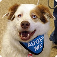 Adopt A Pet :: Wally - Garfield Heights, OH