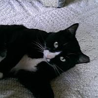 Adopt A Pet :: Loki - Bonita Springs, FL