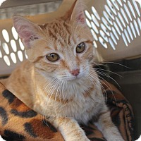 Adopt A Pet :: Marigold YOUNG FEMALE - Morehead, KY