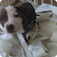 Adopt A Pet :: Littlefoot - Sacramento, CA