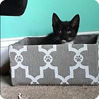 Adopt A Pet :: Arya - Marietta, GA