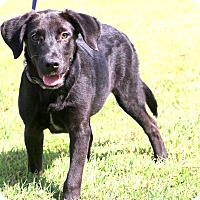 Adopt A Pet :: Jack Daniels - Glastonbury, CT