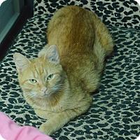 Adopt A Pet :: Princess - Evansville, IN