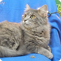 Adopt A Pet :: Holly - Bucyrus, OH