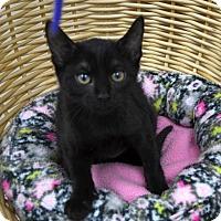 Adopt A Pet :: Robin - Wheaton, IL