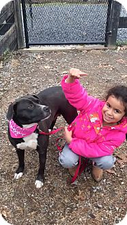 Boxer/Terrier (Unknown Type, Medium) Mix Dog for adoption in West Grove, Pennsylvania - Nina