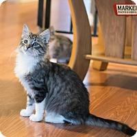 Adopt A Pet :: Trillian - St. Paul, MN