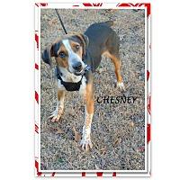Adopt A Pet :: CHESNEY - Ventnor City, NJ