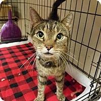 Adopt A Pet :: Sir Malcolm - Wayne, PA