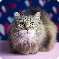 Adopt A Pet :: OPHELIA - Roanoke, VA