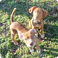 Adopt A Pet :: Walt & Disney - Knoxville, TN