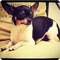 Adopt A Pet :: Oreo - Grand Bay, AL