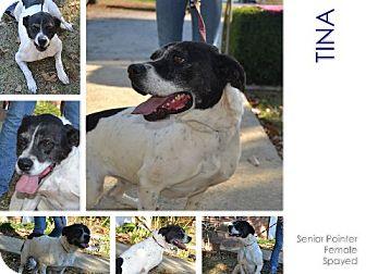 Pointer Mix Dog for adoption in Cochran, Georgia - Tina