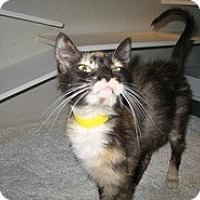 Adopt A Pet :: Inga - Shelton, WA