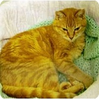 Adopt A Pet :: Mac - Mission, BC