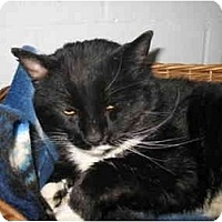 Adopt A Pet :: Willis - Mission, BC