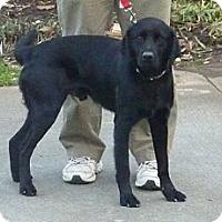 Adopt A Pet :: JONAH - Raleigh, NC