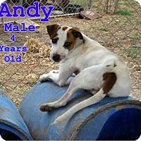 Adopt A Pet :: Andy - Boaz, AL