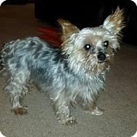 Adopt A Pet :: Chewbacca - Fresno, CA