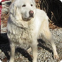 Adopt A Pet :: Angel - Oakland, AR