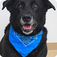 Adopt A Pet :: Rudy - Dublin, CA