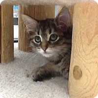 Adopt A Pet :: Milan - Warren, OH