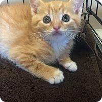 Adopt A Pet :: Hays - Atlanta, GA