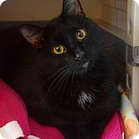Adopt A Pet :: Zen - Des Moines, IA