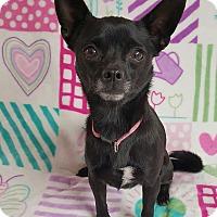 Adopt A Pet :: Simone - Yucaipa, CA