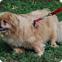 Adopt A Pet :: Katie - Charlottesville, VA