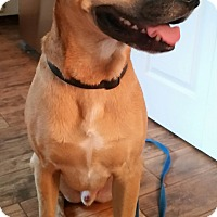 Adopt A Pet :: Neeko-COURTESY POST - Chesterfield, MI