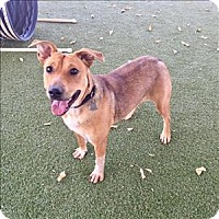 Adopt A Pet :: Bailey - Riverside, CA
