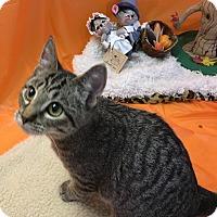 Adopt A Pet :: Sammy - Butner, NC
