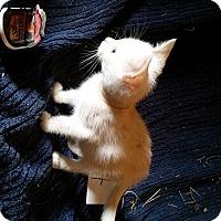 Adopt A Pet :: SLEEPY - Millerstown, PA