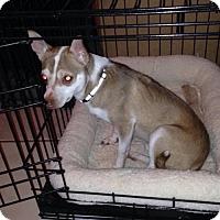 Adopt A Pet :: Chewy - Cincinnati, OH