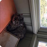 Adopt A Pet :: SunshineCP - Carlisle, PA