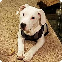 Adopt A Pet :: Frosty - Pembroke, GA