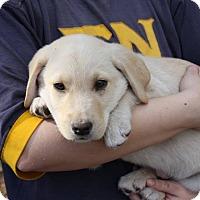 Adopt A Pet :: Mason - Auburn, MA