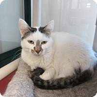 Adopt A Pet :: Leona - Kingston, WA